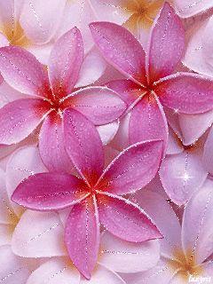 Цветочный фон - анимация на телефон №1011144