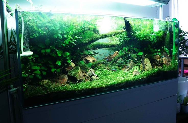 264 best Aquascaping French images on Pinterest ...