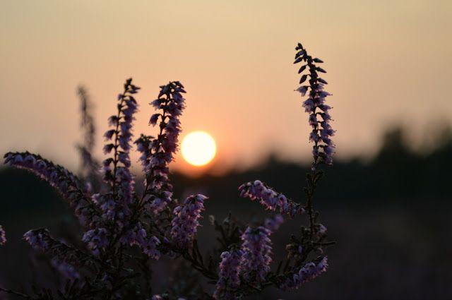 Threadyarknot: De hei bij zonsondergang