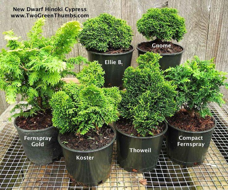 New Miniature Garden Plants for Indoor orOutdoor