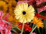 15 Best Plants for Cleaner Indoor Air | The Weather Channel