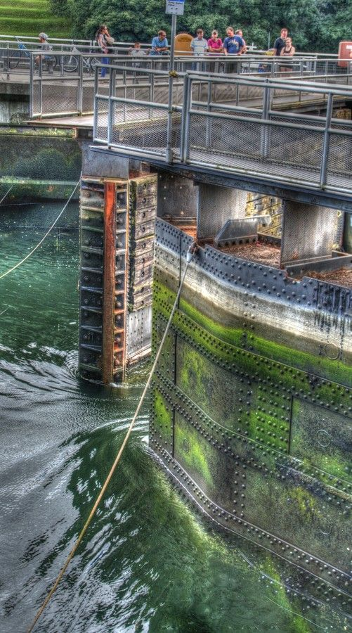 159 best ballard seattle washington images on pinterest for Ballard locks fish ladder