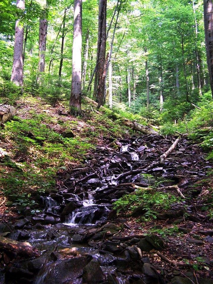 Stužica prales, národný park Pieniny, Národné parky Slovenska
