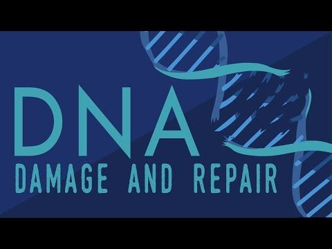 What happens when your DNA is damaged? - Monica Menesini | TED-Ed