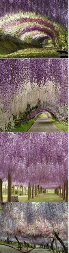 Apparently this is in Japan. It's like it's raining purple!