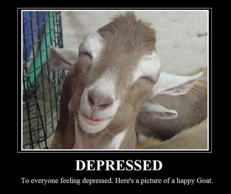 To everyone feeling depressed, here's a pic of a smiling goat. Lol. Made me smile! Click To See The Pic...