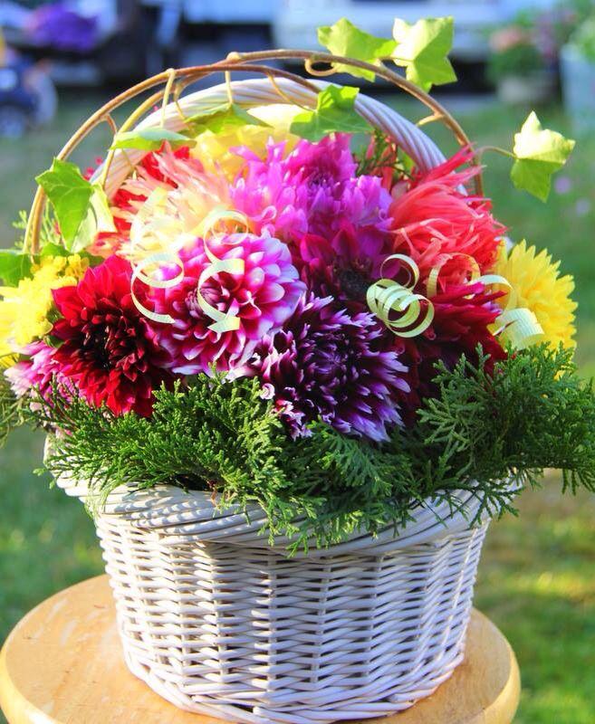 Dahlia basket arrangement
