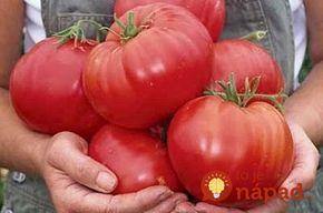 Dnes sa s vami podelíme o recept istého záhradkára, ktorý sa oň podelil v jednom veľmi starom vydaní novín. V redakcii To je nápad! sme sa k nim dostali iba náhodou, no keď sme sa naň dopytovali starších pestovateľov, mnohí nám potvrdili, že ho naozaj používajú a vďaka tomu sa môžu pochváliť neuveriteľnou úrodou paradajok....