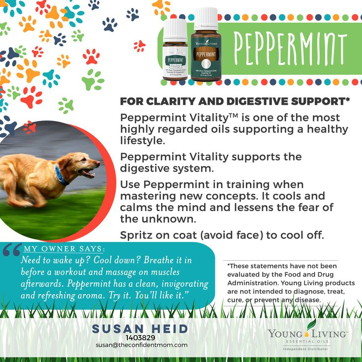 Cool, calming, and for use for happy tummies--Young Living's Peppermint and Peppermint Vitality essential oils are perfect for your dog's wellness.