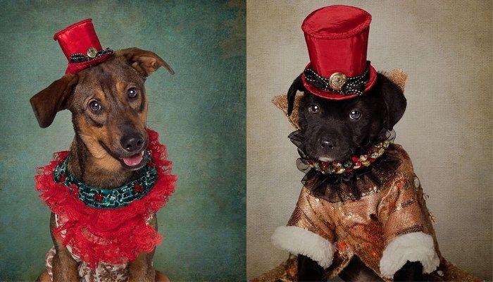 Photo source: Tammy Swarek | Shelter Pets Project