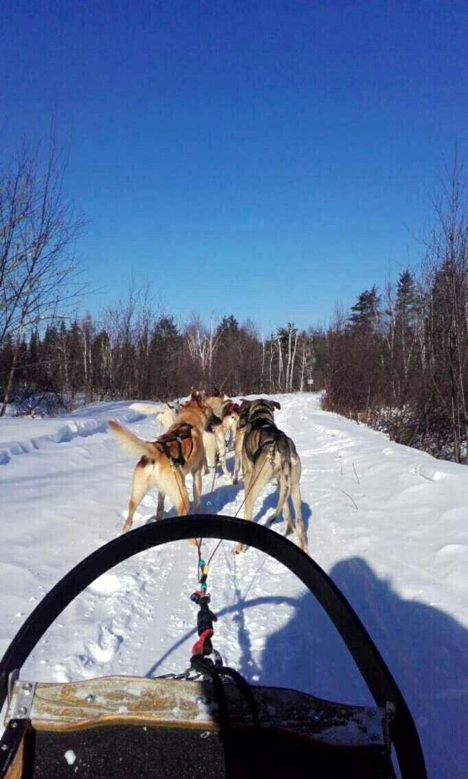 Les chiens de traîneau quel moment inoubliable !!!!!!❄