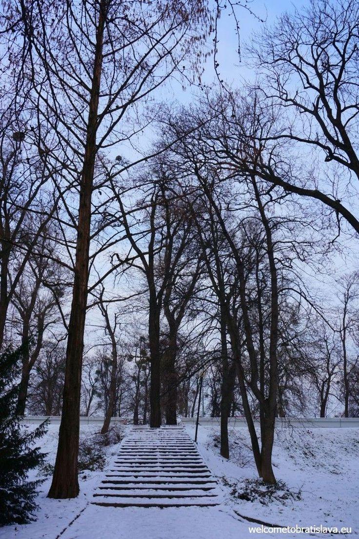 WINTER IN BRATISLAVA - WelcomeToBratislava | Garden of Janko Kral