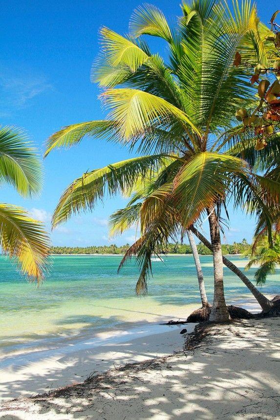 Hawaiian Palms - #Hawaii beach & ocean - MagicMurals