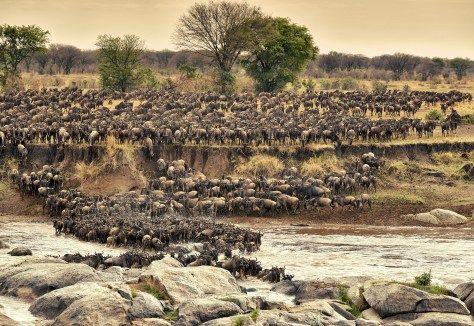 Zur Tierwanderung nach Tansania...