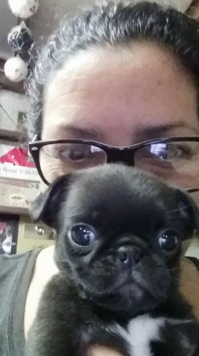 36 best pugs images on pinterest pug dogs pugs and baby pugs puggy time thecheapjerseys Gallery