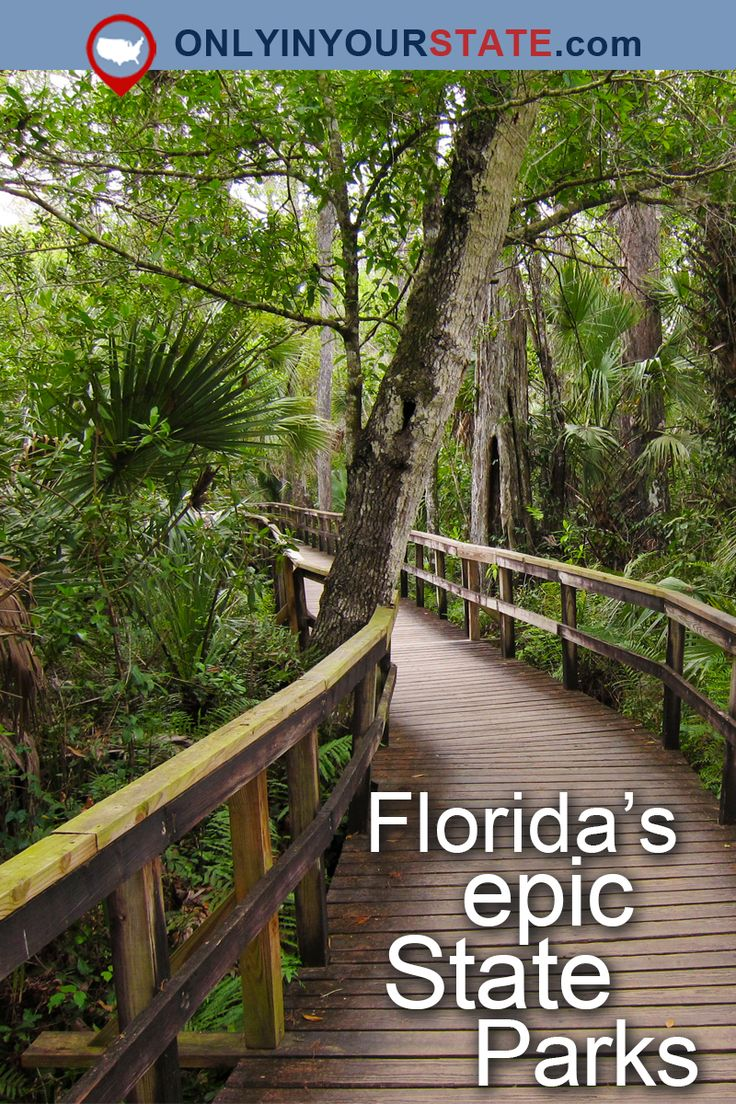 Travel | Florida | Attractions | East Coast | USA | State Parks | Natural Beauty | Outdoors | Day Trips | Things To Do | Explore | Wildlife | Places To Visit | Tampa | Manatees | Bluffs | Natural Wonders | Hidden Gems | St. Augustine | Beaches | Blue Spring | Caves | Natural Springs | Prairie | Gardens | Forest