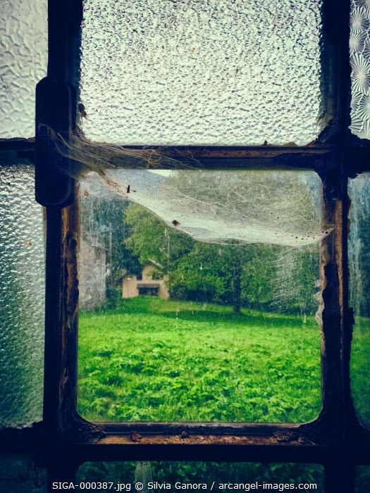 Chequered window pane with spider web. From inside looking out on a meadow with tree and house - ©Silvia Ganora Photography - All Rights Reserved  #bookcovers #windows