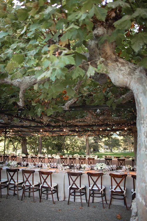 Fall Wedding at Beaulieu Garden in Rutherford, California - Vineyard Reception Space