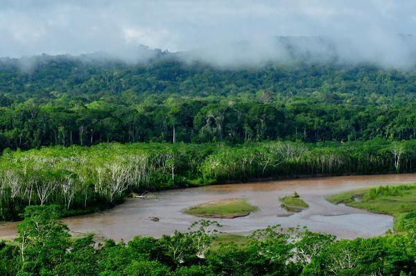 Plantas Del Amazonas Con Sus Nombres Lista Y Fotos Bosque Pluvial Amazónico Bioma Terrestre Biomas
