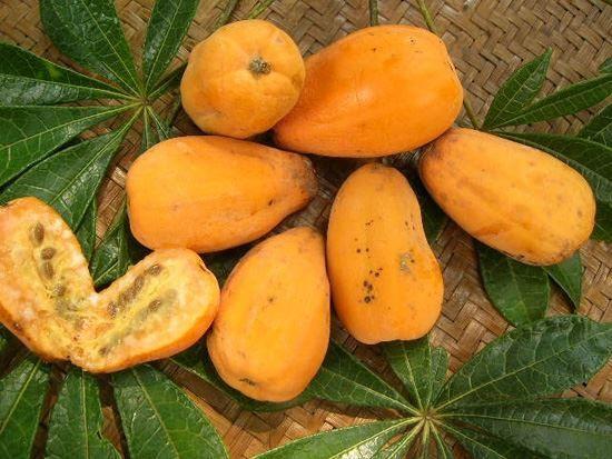 Jaracatiá é o nome popular dado a diferentes espécies de árvores do gênero Jacaratia, também conhecido como Mamoeiro-bravo, Mamoeiro-do-mato, Mamãozinho e mamão de veado.