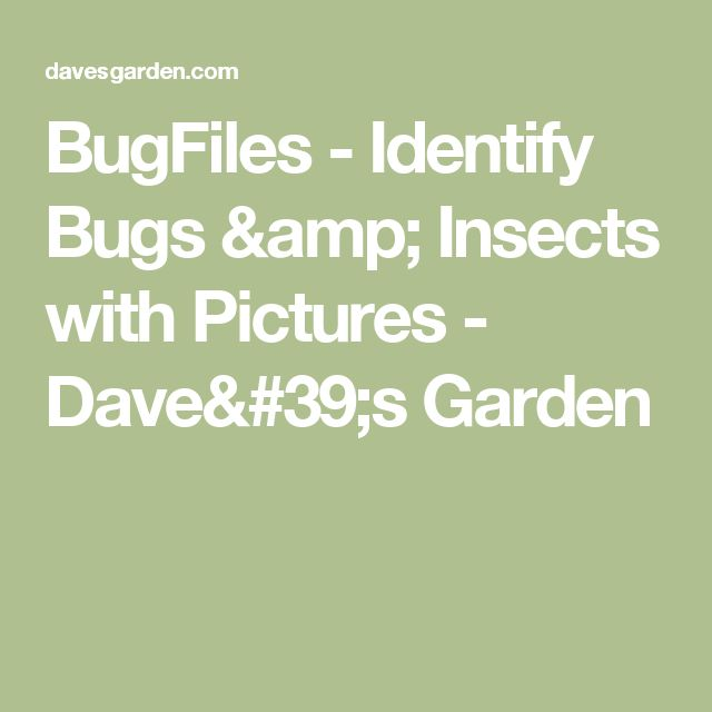 BugFiles - Identify Bugs & Insects with Pictures - Dave's Garden