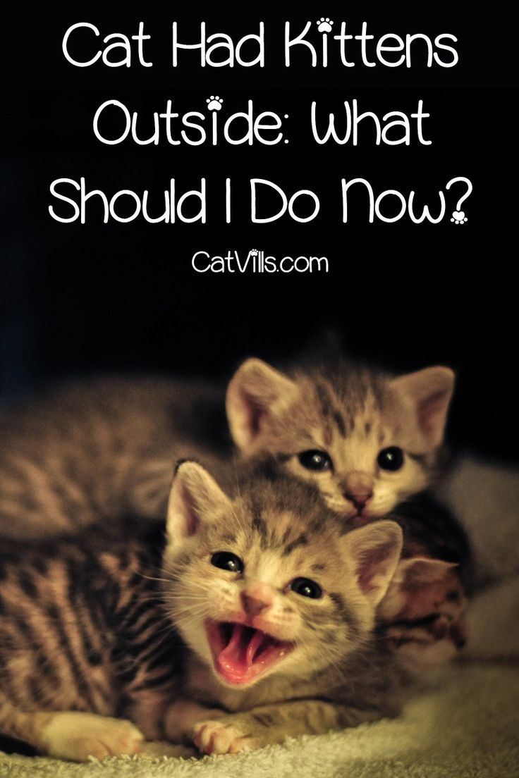 Cat Had Kittens Outside You Ll Need Some Knowledge To Help You Find Them Read On For A Complete Guide To Kitten Care Cat Having Kittens Cute Cats And Kittens