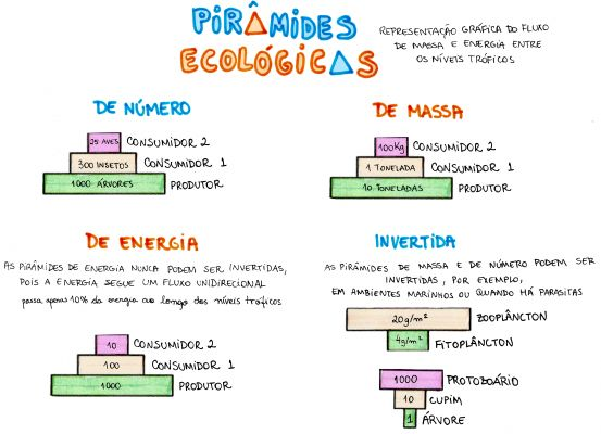 Mapa Mental: Piramides Ecologicas