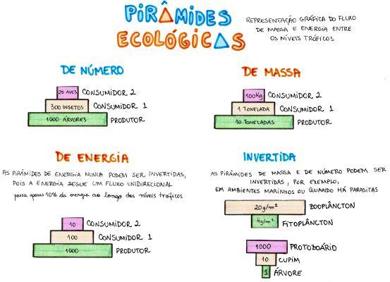 Mapa Mental: Piramides Ecologicas