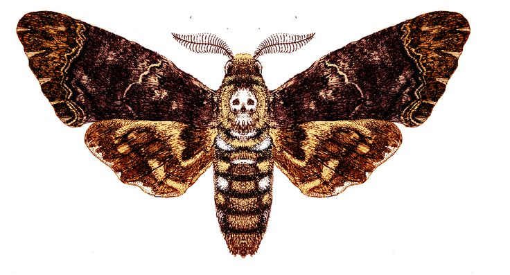 Analysis of Death and Loss in Death of the Moth