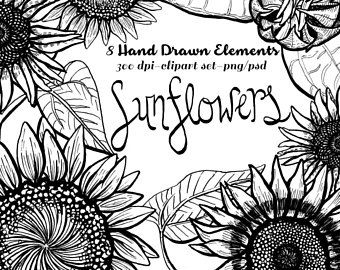 Sunflower Clipart Pen Ink Hand Drawn Autumn Graphics Outline