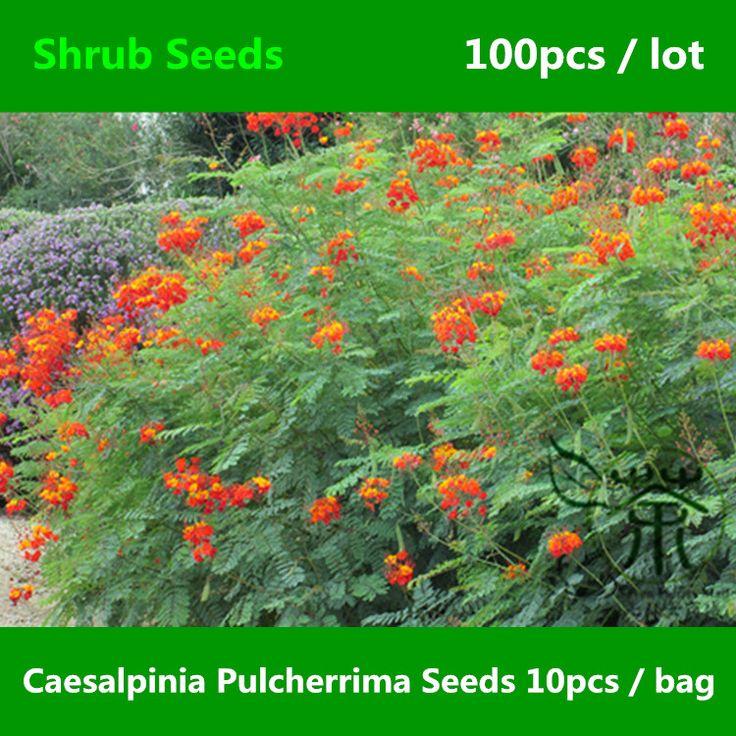 Familia Fabaceae Caesalpinia Pulcherrima Semillas 100 unids, Yang Jin Feng Semillas de Flor de Pavo Real, enano Poinciana Árbol de Hoja Perenne Arbustos Semillas(China (Mainland))