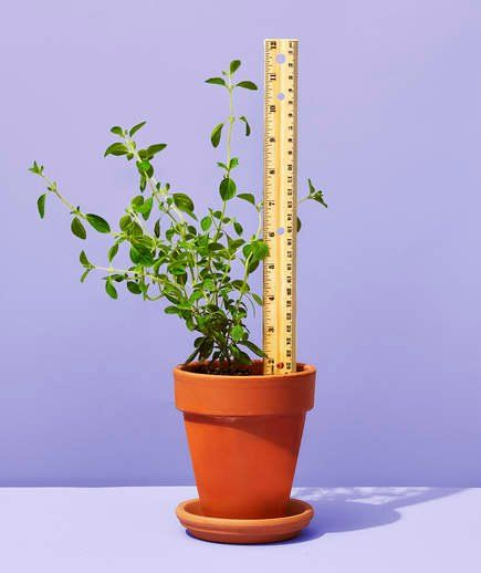 Ruler as Plant Marker | Kids will have fun using a ruler to track a plant's growth from seedling to adult. (Label the blank side with the plant's name.) The wooden stick can also serve as a stake for plants that need support, like tomatoes.