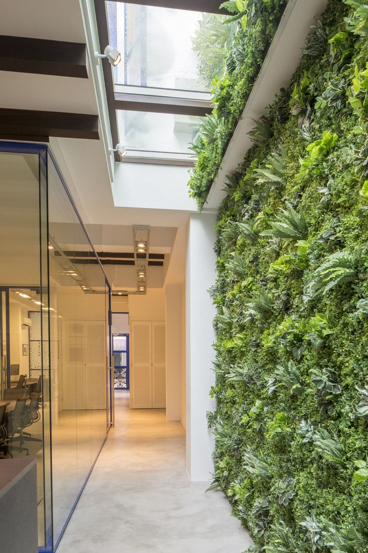 green wall office.  wall aquilus office vertical green wall  fake inside real outside glass  open roof in a shophouse singapore  pinterest shophouse green  and wall office