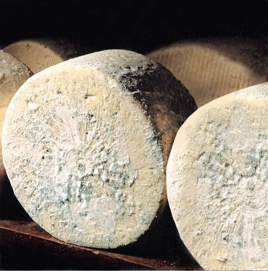 ~✿ڿڰۣ  Bleu d'Auvergne is a French blue cheese, named for its place of origin in the Auvergne region of south-central France. It is made from cow's milk, and is one of the cheeses granted the Appellation d'Origine Contrôlée from the French government. Bleu d'Auvergne has a strong and pungent taste, but to a lesser extent than other blue cheeses; it is less salted, with a creamier and more buttery taste and a moister texture.