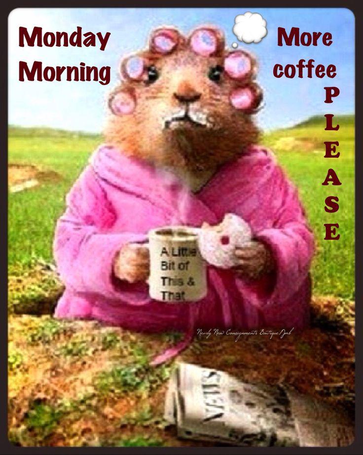 Monday Humor   Monday funny   Animal humor