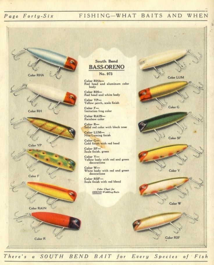 1282 best images about Fishing Infographics on Pinterest ...