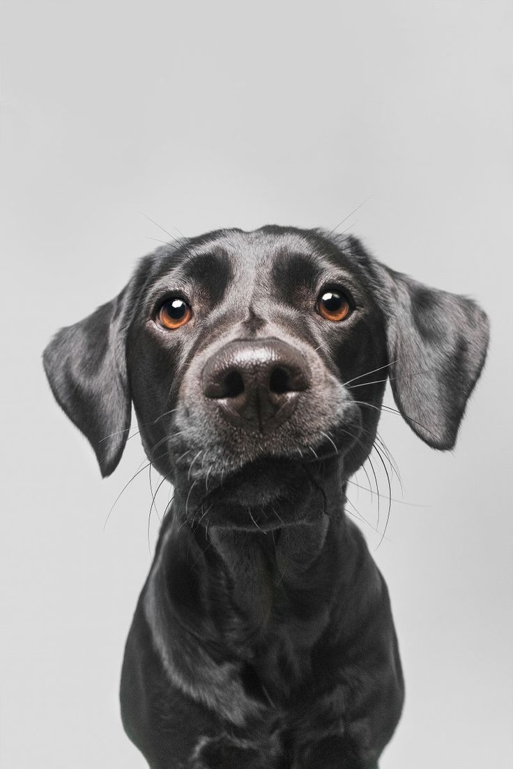 Photo by Elke Vogelsang - worth clicking through her other photos.  Beautiful!