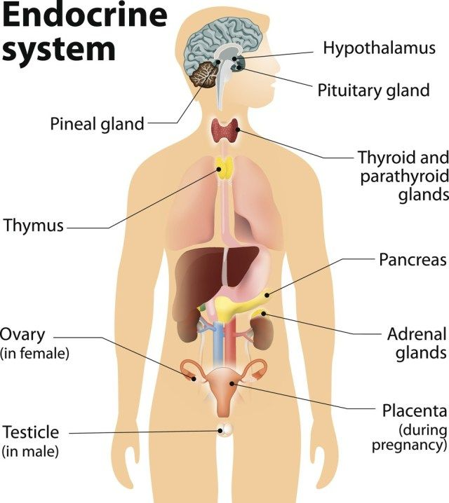 Endocrine System Label Endocrine System Label The Endocrine