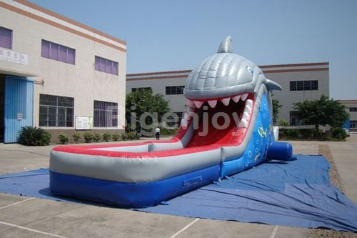 Shark water slide with pool