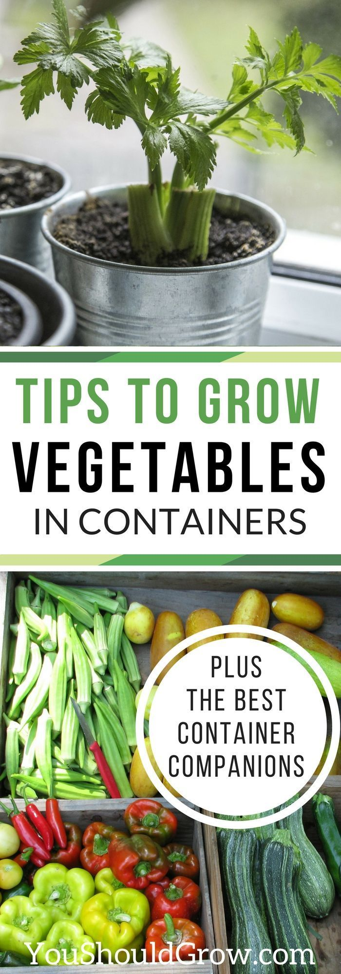 Suggestions To Develop Greens In Containers