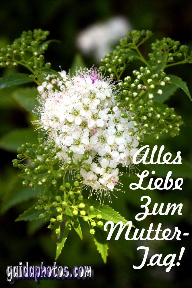 Sprüche zum Muttertag - http://www.gaidaphotos.com/sprueche-zum-muttertag/