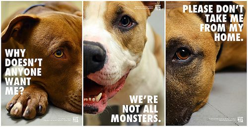 Stop Breed-Specific Legislation Posters