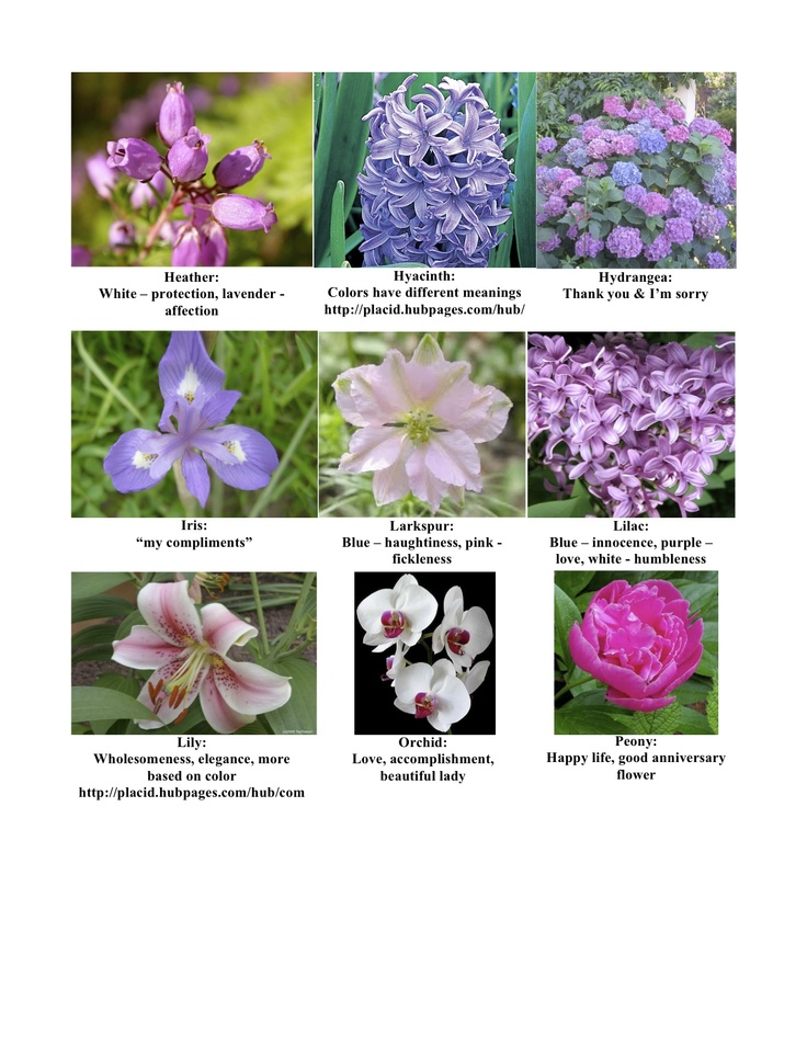Flowers and their meanings page 2 of 3