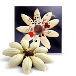 Romance, Anniversary  Valentine : Valentine - He loves me… She loves me… - Chocolate Daisy