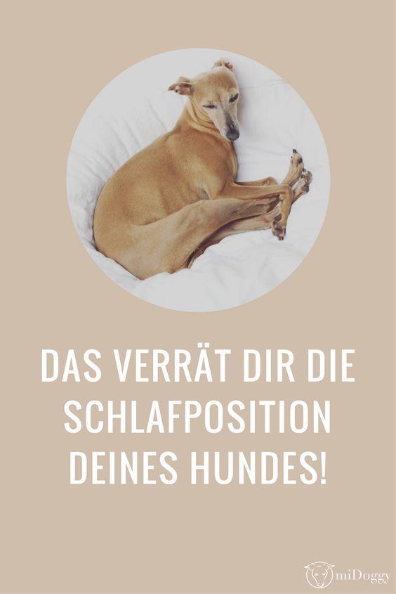 Was verrät Dir die Schlafposition Deines Hundes? Hier erfährst Du es.