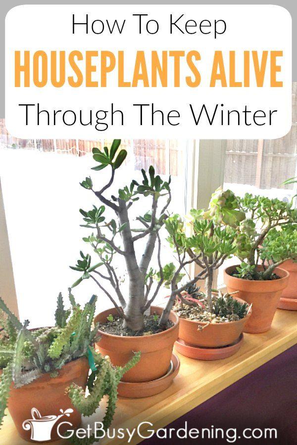 How To Keep Indoor Plants Alive In Winter Get Busy Gardening!