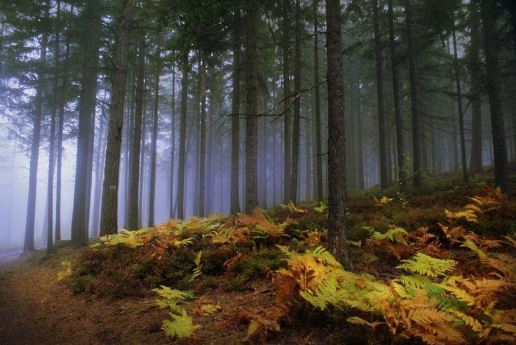MOUNTAIN MOOD   Kat von Rose     BLOG details: http://kat-von-rose.blogspot.com/2016/11/mountain-mood-photography.html  #forest #fog #blue #woods #mystical #magical #foggy #alone #nature #dark #landscape #trees #meadow #aesthetics