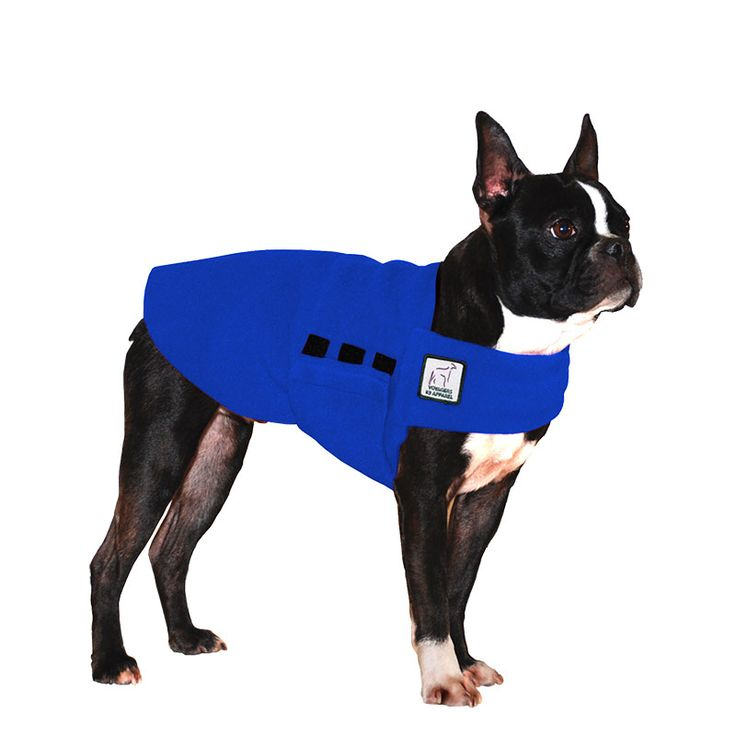 Blue Boston Terrier Dog Tummy Warmer, great for warmth, anxiety and laying with our dog rain coat. High performance material. Made in the USA.