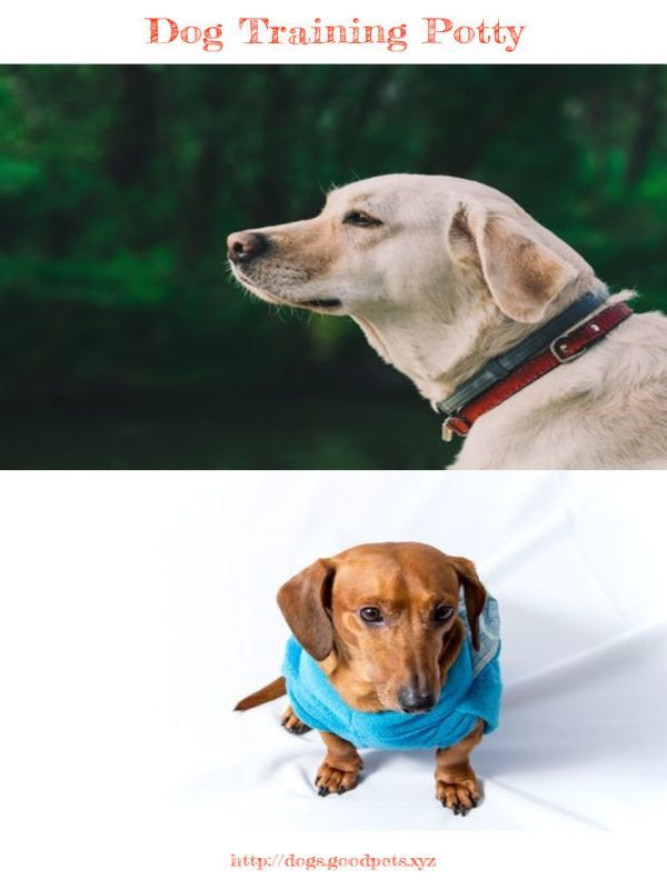 Dog Training Tips In Hindi Pdf Dog Advice Dogs Dog Spay