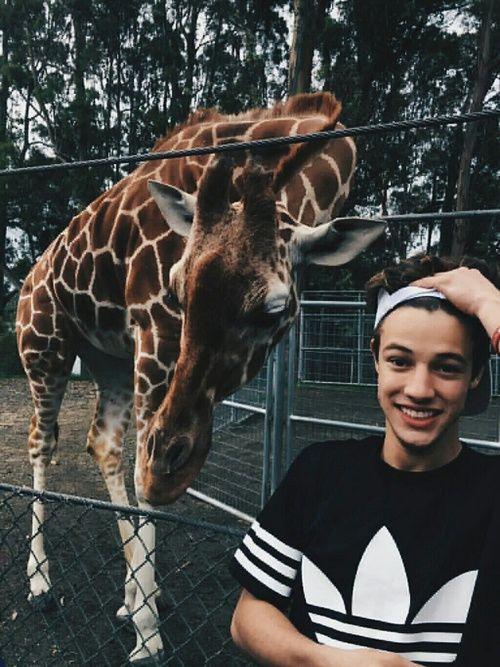 Cameron dallas, magcon, and giraffe